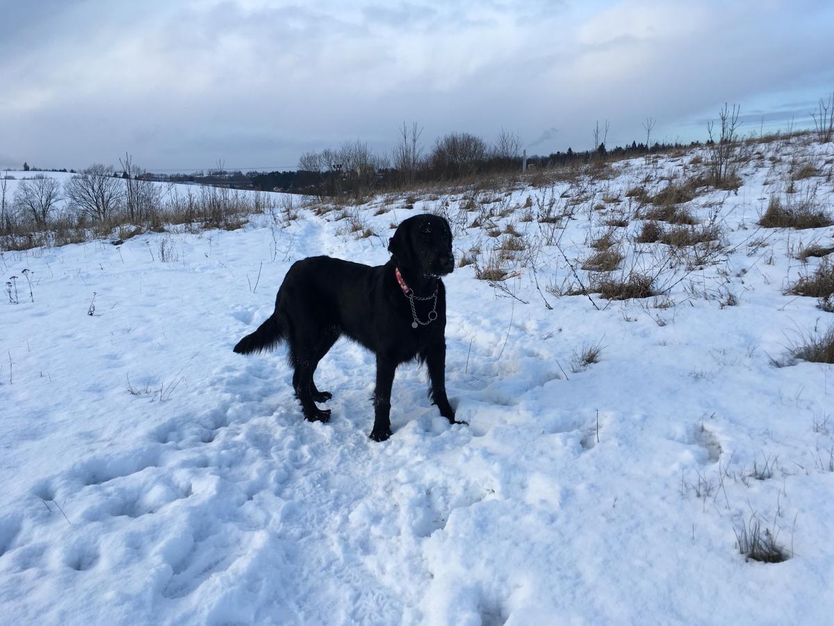 Sněžné dovádění